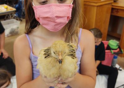 Chicken in girls' hands